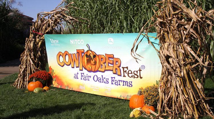cowtoberfest-thomsen1
