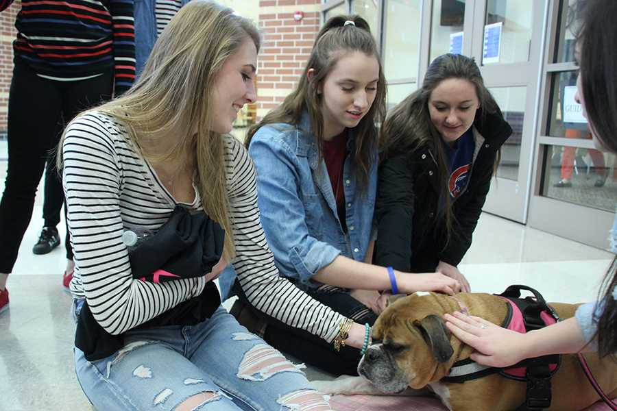 Students show love to the dog available to pet during De-Stress Fest. This event is held every year the week before finals.